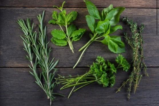 healing-herbs-1